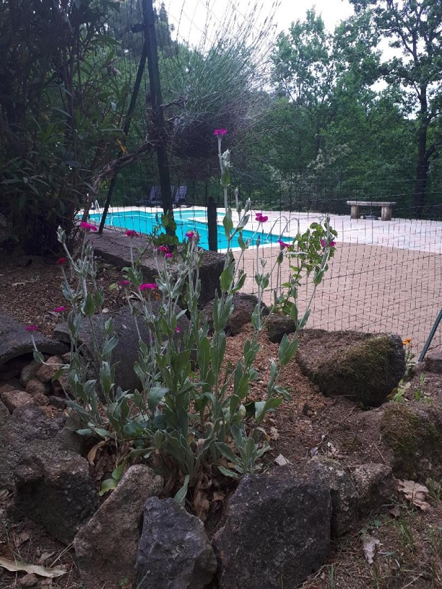 1 mai 2019 piscine