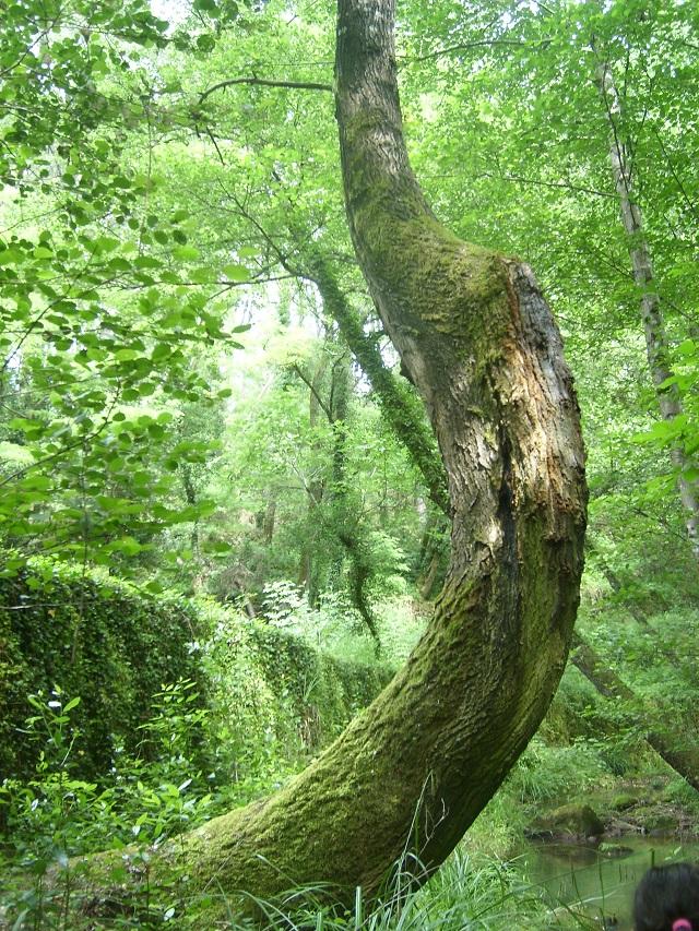 arbre courbé